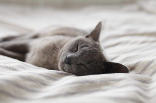 猫 ベッド