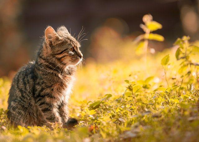 子猫 キャット